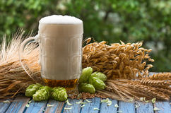 Beer malt hops. Large glass of light beer, malt, hops, barley ears standing on an old wooden table dyeing, natural background Royalty Free Stock Photo