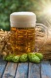 Beer malt hops Royalty Free Stock Photos
