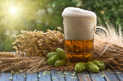 Beer malt hops. Large glass of light beer, malt, hops, barley ears standing on an old wooden table dyeing, natural background Stock Photos