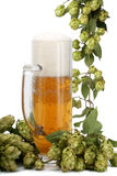 Beer mug, beer barrel of green hops Royalty Free Stock Photography