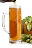 Beer mug, beer barrel of green hops Royalty Free Stock Photo