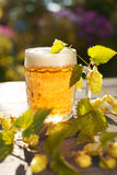 Beer. Mug with beer and hop on sunset summer autumn background. Royalty Free Stock Image