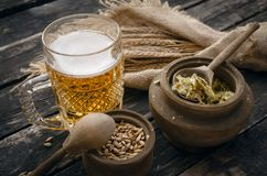 Glass of frothy beer, malt and hop. Beer in the mug glass with malt and hop and rye ears on the aged wooden table background stock photo