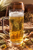 Beer mug. With hops, wheat, grain, barley and malt Royalty Free Stock Images