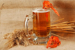 Beer naturmort Royalty Free Stock Images