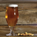 Beer and nuts Stock Images