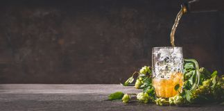 Beer is poured into mug on dark rustic wooden background with hops, front view, copy space royalty free stock image