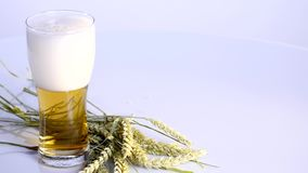 Beer is pouring into glass on white background with A bunch of wheat Stock Image
