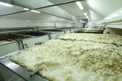Beer production. Beer with foam in tubs inside the brewery royalty free stock images