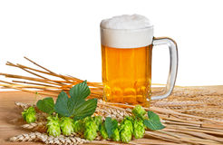 Beer and raw material for beer production Stock Image