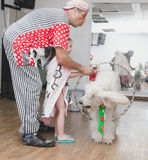 Beer-Sheva, ISRAEL - Clown plays with white poodle hoop, July 25, 2015 Stock Photo