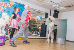 Beer-Sheva, ISRAEL - Clown throwing the ball white poodle - July 25, 2015 Stock Photo