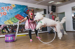 Beer-Sheva, ISRAEL -White circus poodle jumps through a hoop clown-woman, July 25, 2015 Stock Photography