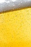 Beer shot close up Stock Images