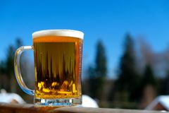Beer snow sun ight spring day. Beer on snow sun ight spring day Stock Images