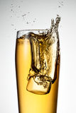 Beer splash with ice Royalty Free Stock Photography