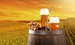 Beer still life Stock Images