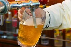 Beer on Tap. Bartender serving beer in the bar Royalty Free Stock Image