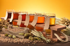 Beer testing Royalty Free Stock Images