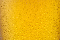 Beer texture Royalty Free Stock Photo