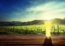 Beer and vineyard in sunset time Royalty Free Stock Images