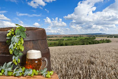 Beer with wheat field Stock Photos