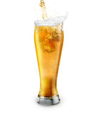 Beer on white background. Party royalty free stock photo