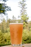 A Beer in the Woods Royalty Free Stock Photos