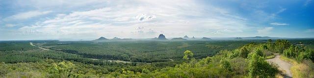 Beerburrum状态森林澳大利亚全景 免版税库存图片