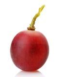 Beere der Nahaufnahme der roten Trauben Stockbilder