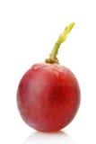 Beere der roten Trauben mit Tautropfen Stockbild