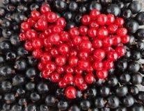 Beere die Anordnung in Form der Herzen von den roten und Schwarzen Johannisbeeren Lizenzfreies Stockfoto