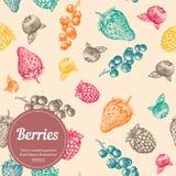 Beere, Erdbeere, Brombeere, Korinthe, Himbeere, Hand gezeichnetes nahtloses Vektormuster Organische Illustration der Natur Lizenzfreie Stockbilder