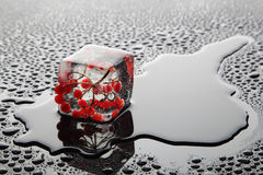 Beere im Eis (Viburnum) Lizenzfreies Stockbild