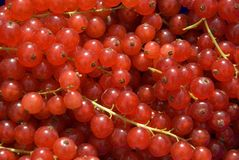 Beeren. Close up of a few currants Royalty Free Stock Photography
