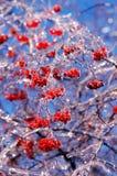 Beeren abgedeckt im Eis Lizenzfreie Stockbilder