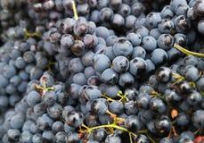 Beeren der blauen Trauben legen auf Zähler des Lebensmittelmarktes Lizenzfreies Stockbild