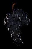 Beeren der dunklen Weintraube mit Wasser fällt in das Restlicht, das auf schwarzem Hintergrund lokalisiert wird Stockbild