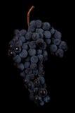 Beeren der dunklen Weintraube mit Wasser fällt in das Restlicht, das auf schwarzem Hintergrund lokalisiert wird Lizenzfreie Stockbilder