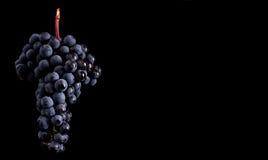Beeren der dunklen Weintraube mit Wasser fällt in das Restlicht, das auf schwarzem Hintergrund lokalisiert wird Lizenzfreie Stockfotografie