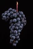 Beeren der dunklen Weintraube mit Wasser fällt in das Restlicht, das auf schwarzem Hintergrund lokalisiert wird Lizenzfreies Stockfoto