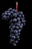 Beeren der dunklen Weintraube mit Wasser fällt in das Restlicht, das auf schwarzem Hintergrund lokalisiert wird Stockbilder