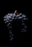 Beeren der dunklen Weintraube mit Wasser fällt in das Restlicht, das auf schwarzem Hintergrund lokalisiert wird Stockfotos