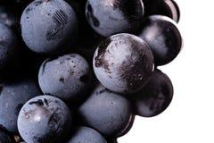 Beeren der dunklen Weintraube mit Wasser fällt in das Restlicht, das auf weißem Hintergrund lokalisiert wird Stockfotos