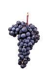 Beeren der dunklen Weintraube mit Wasser fällt in das Restlicht, das auf weißem Hintergrund lokalisiert wird Lizenzfreie Stockfotos