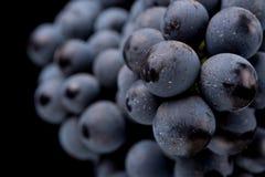 Beeren der dunklen Weintraube mit Wasser fällt in das Restlicht, das auf weißem Hintergrund lokalisiert wird Stockbilder