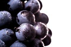 Beeren der dunklen Weintraube mit Wasser fällt in das Restlicht, das auf weißem Hintergrund lokalisiert wird Lizenzfreie Stockfotografie