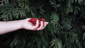 Beeren in der Hand Lizenzfreies Stockfoto