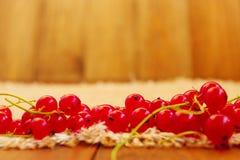 Beeren der roten Johannisbeere Lizenzfreies Stockbild