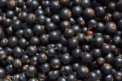 Beeren der Schwarzen Johannisbeere Lizenzfreies Stockfoto